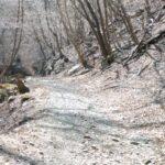 オリンピック興味無いのでプチ林道ツーリングに行ったらガチ林道になってた